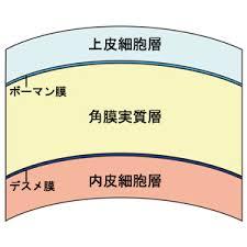 cornea4